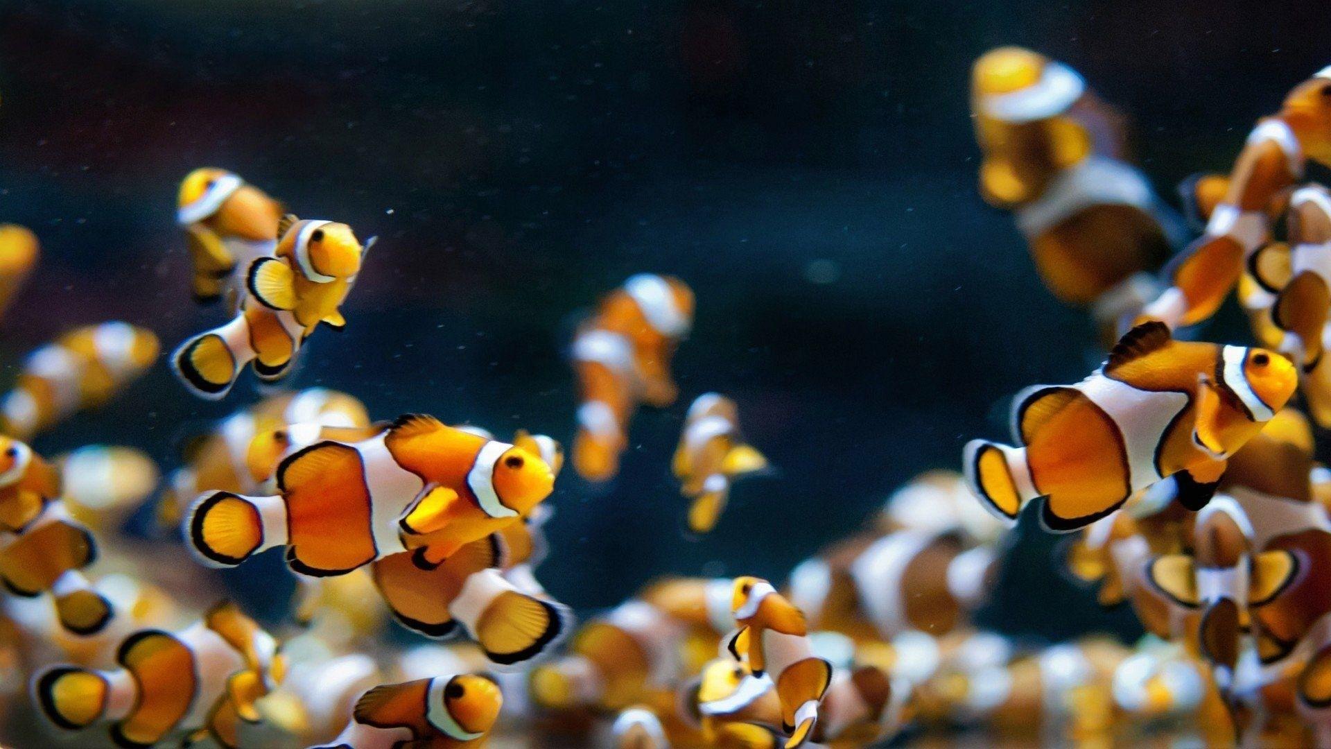 Fish hd desktop wallpaper