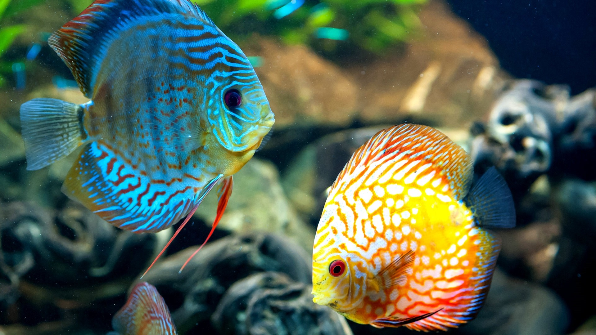 Fish PC Wallpaper HD