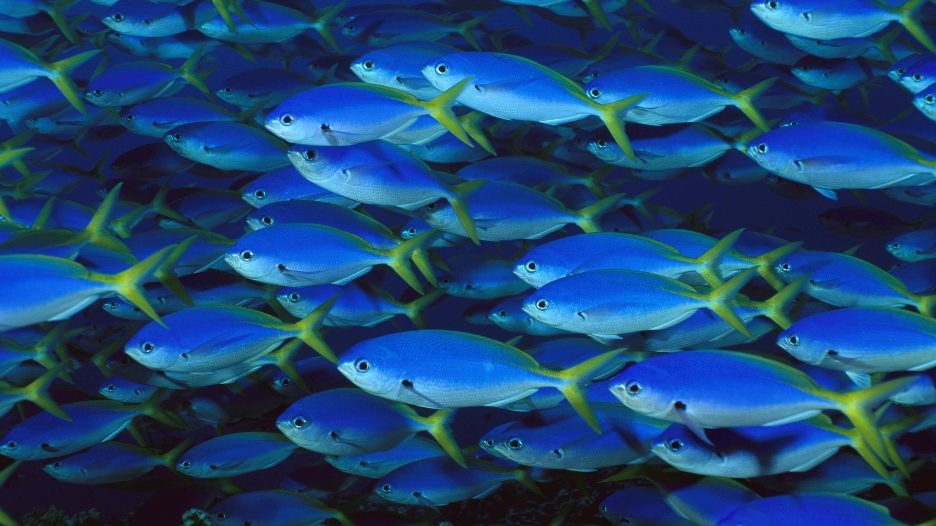 Fish a wallpaper