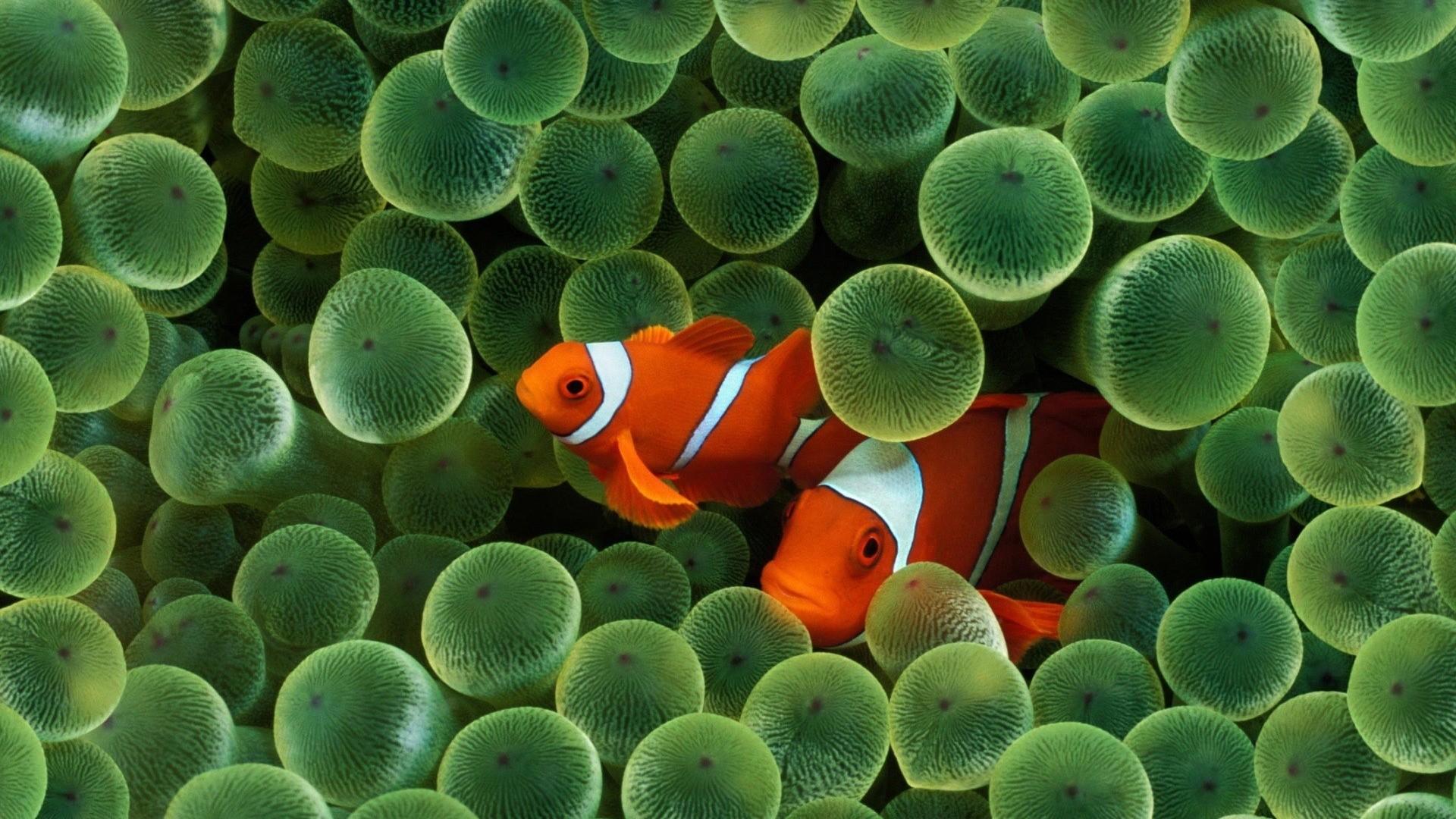 Fish Free Wallpaper