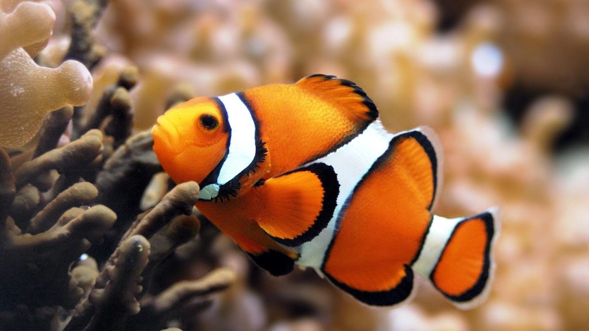 Fish HD Wallpaper
