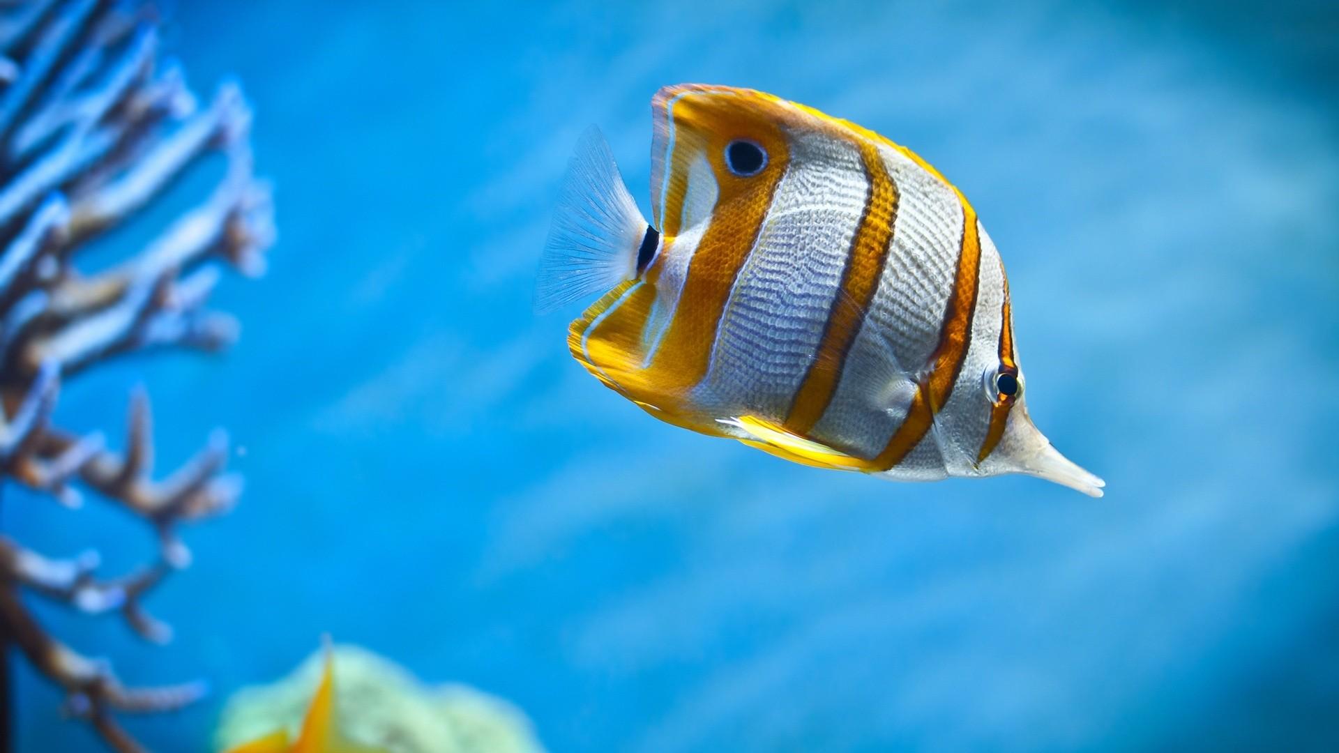 Fish Wallpaper theme