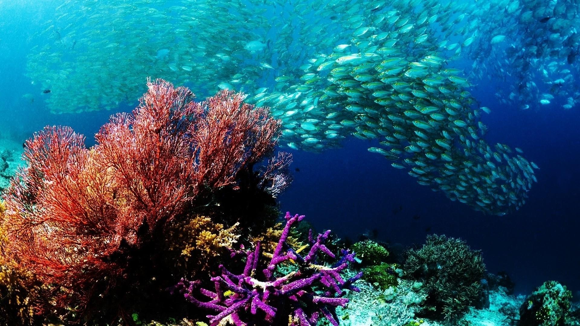 Fish hd wallpaper download