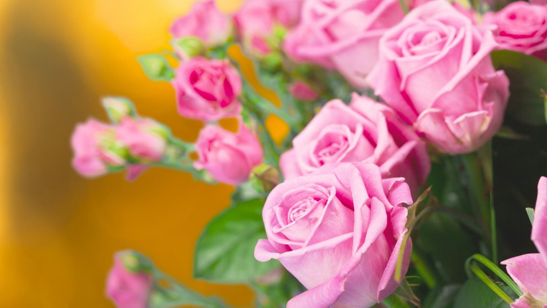 Pink Rose Wallpaper theme