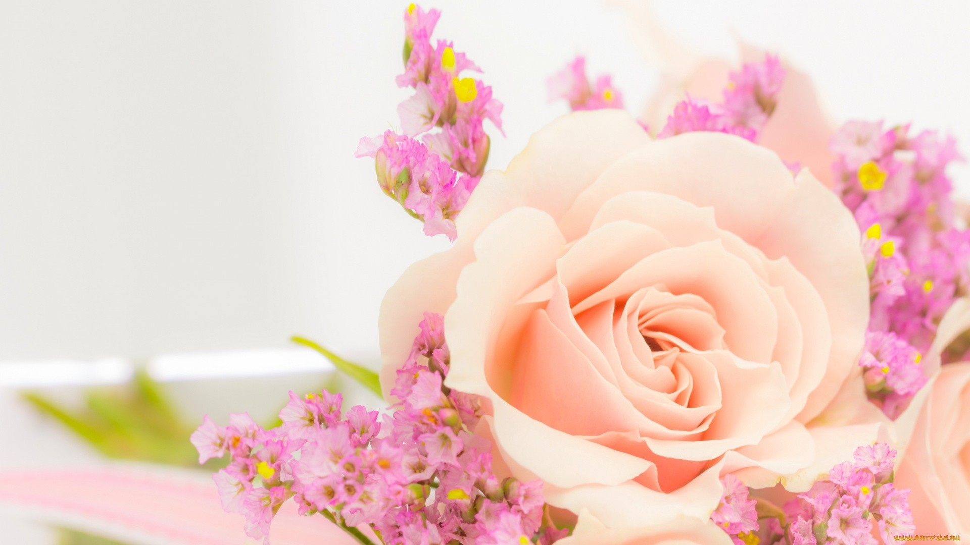 Pink Rose Wallpaper and Background