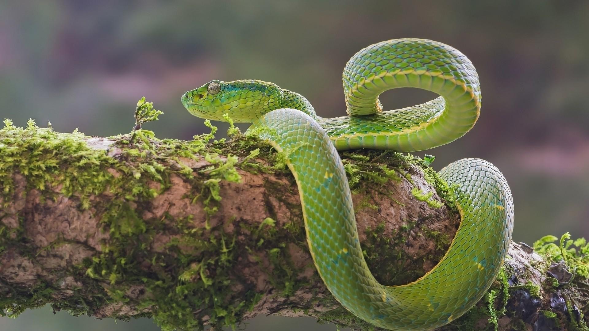 Snake Full HD Wallpaper