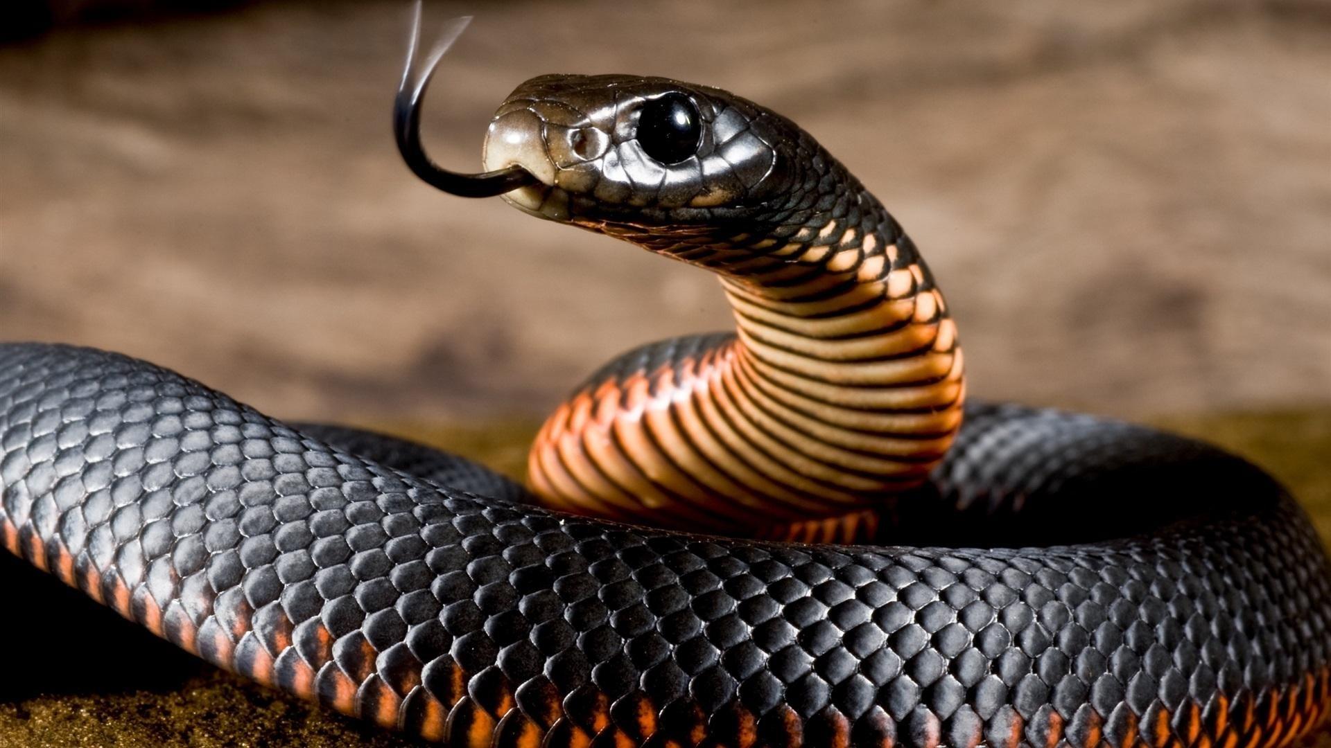 Snake Background Wallpaper