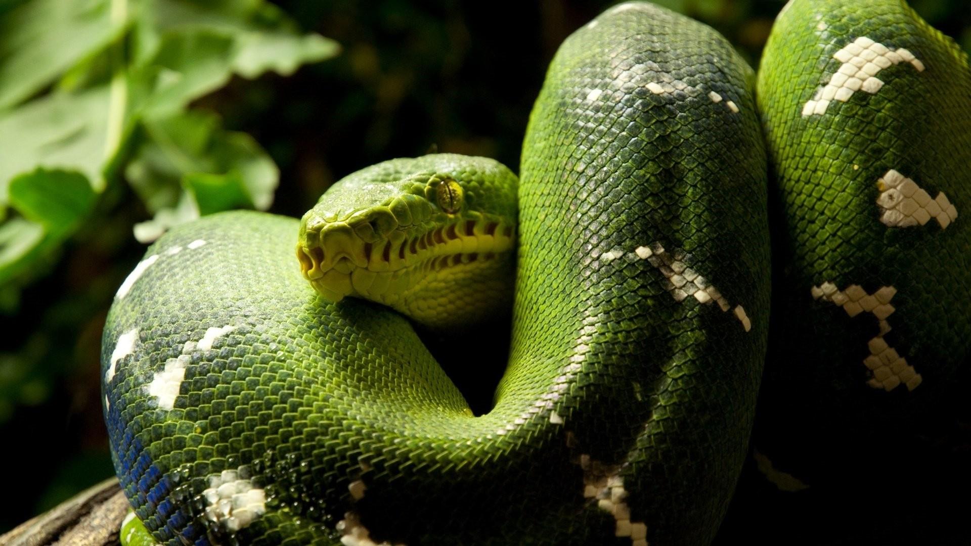 Snake Pic
