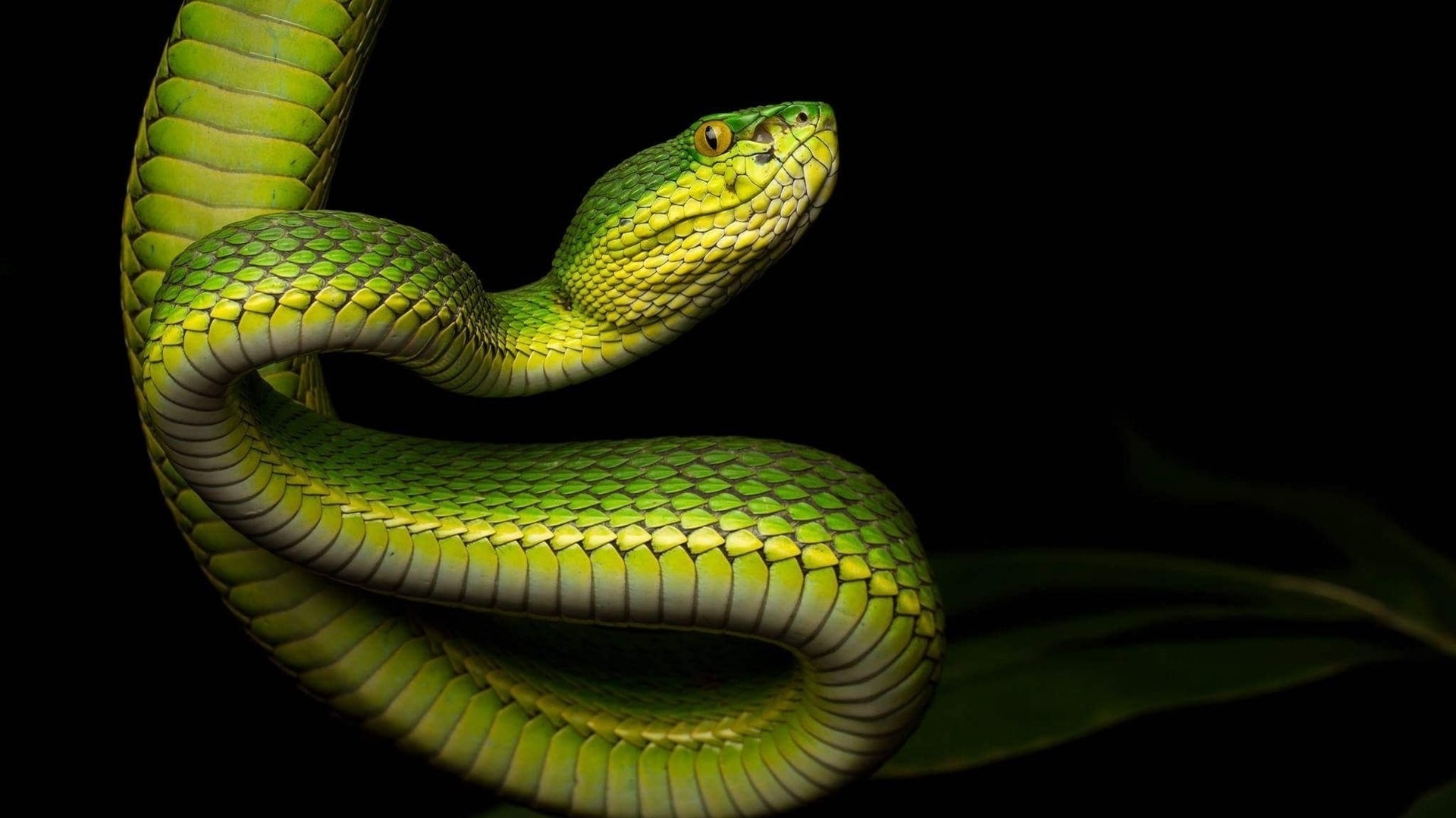 Snake High Quality