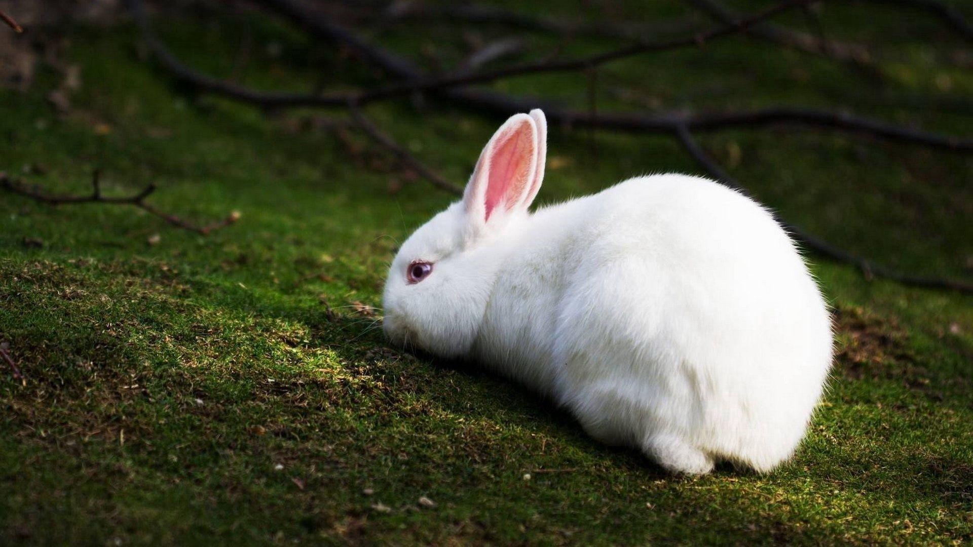 Bunny Background