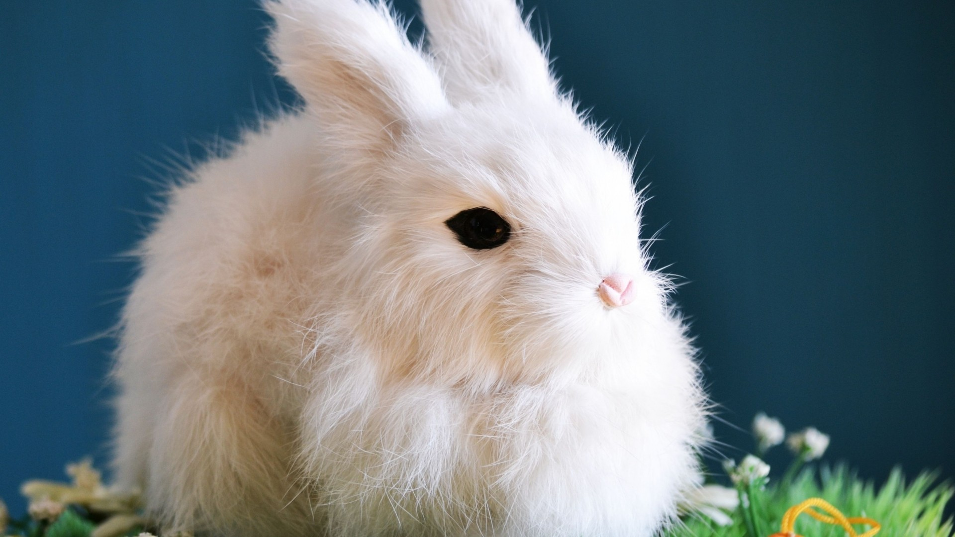 Bunny Wallpaper for pc