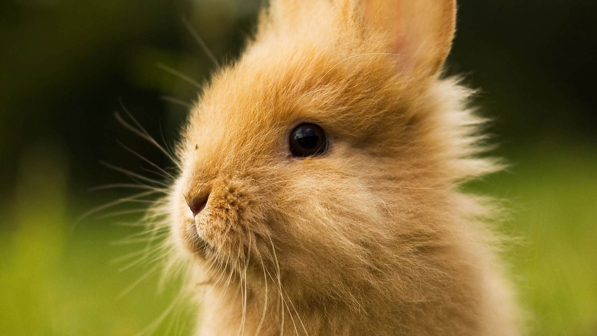 Bunny High Quality
