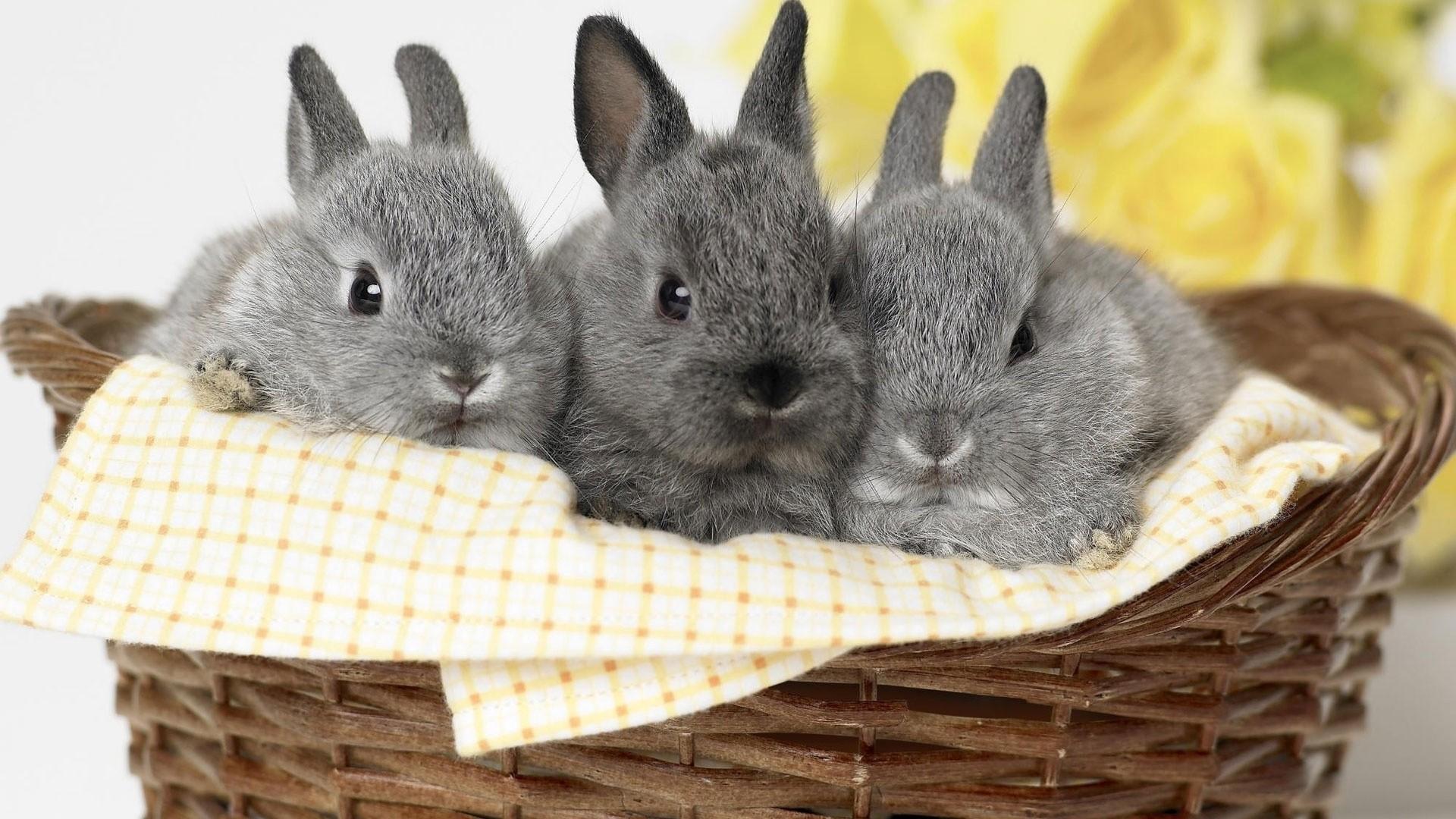 Bunny Full HD Wallpaper