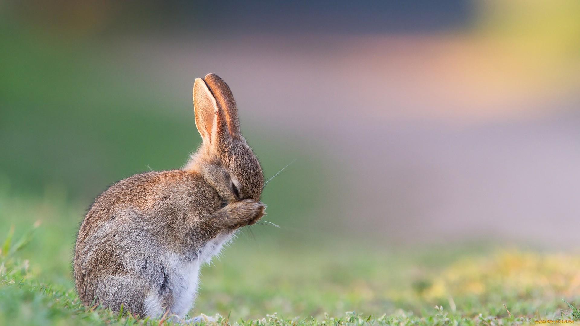 Bunny PC Wallpaper HD