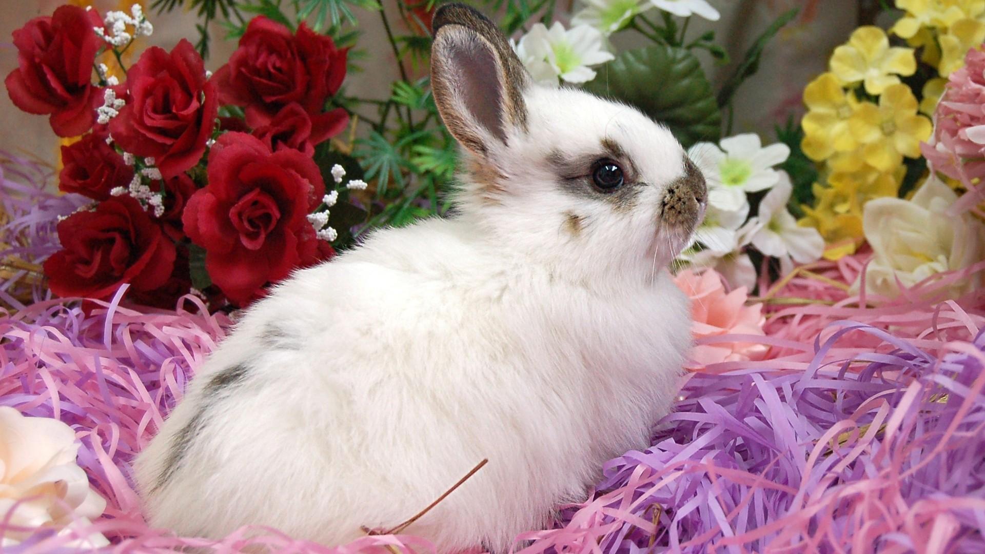 Bunny Background Wallpaper