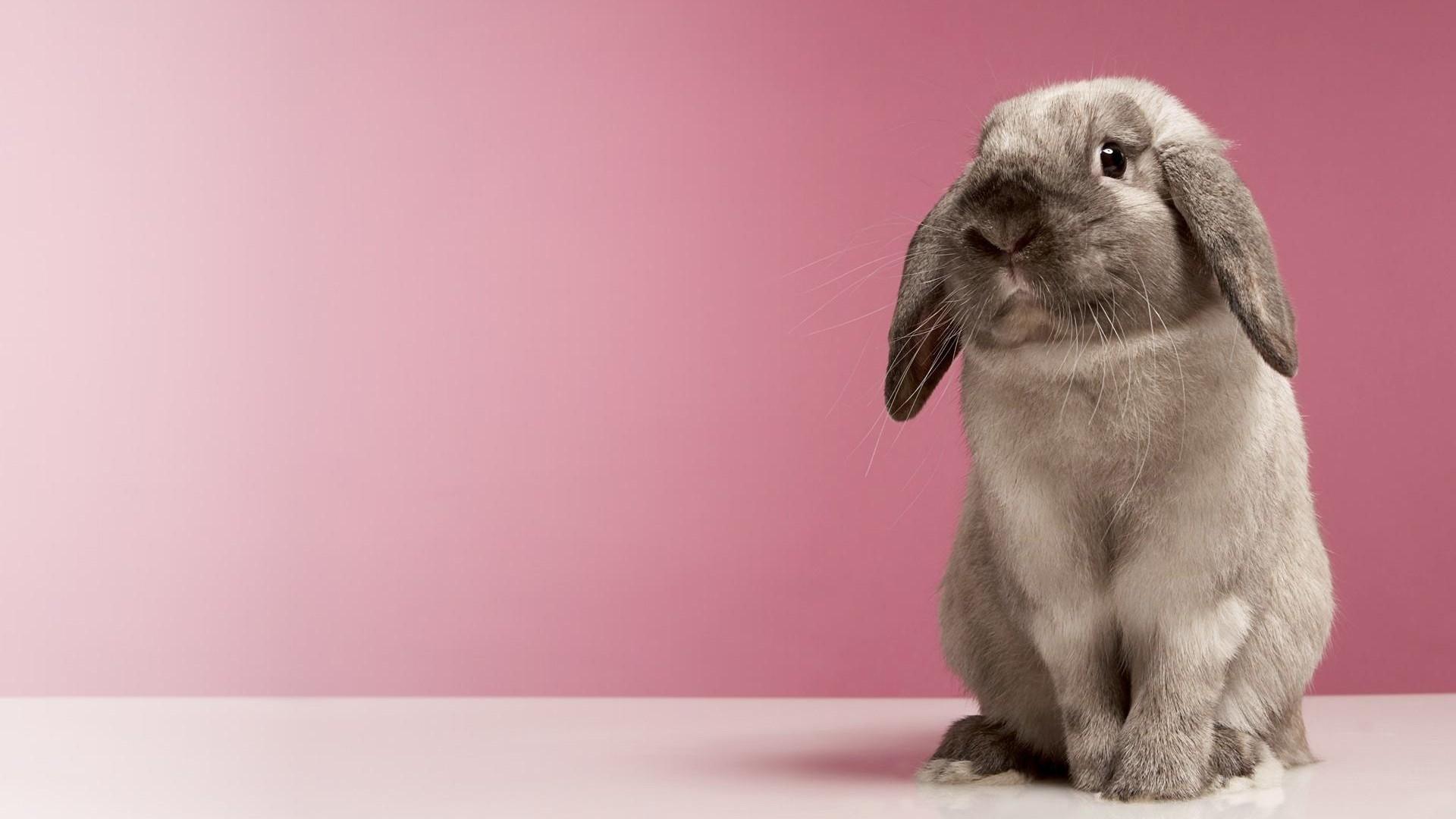 Bunny Pic