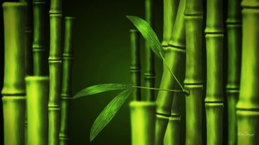 Bamboo High Quality