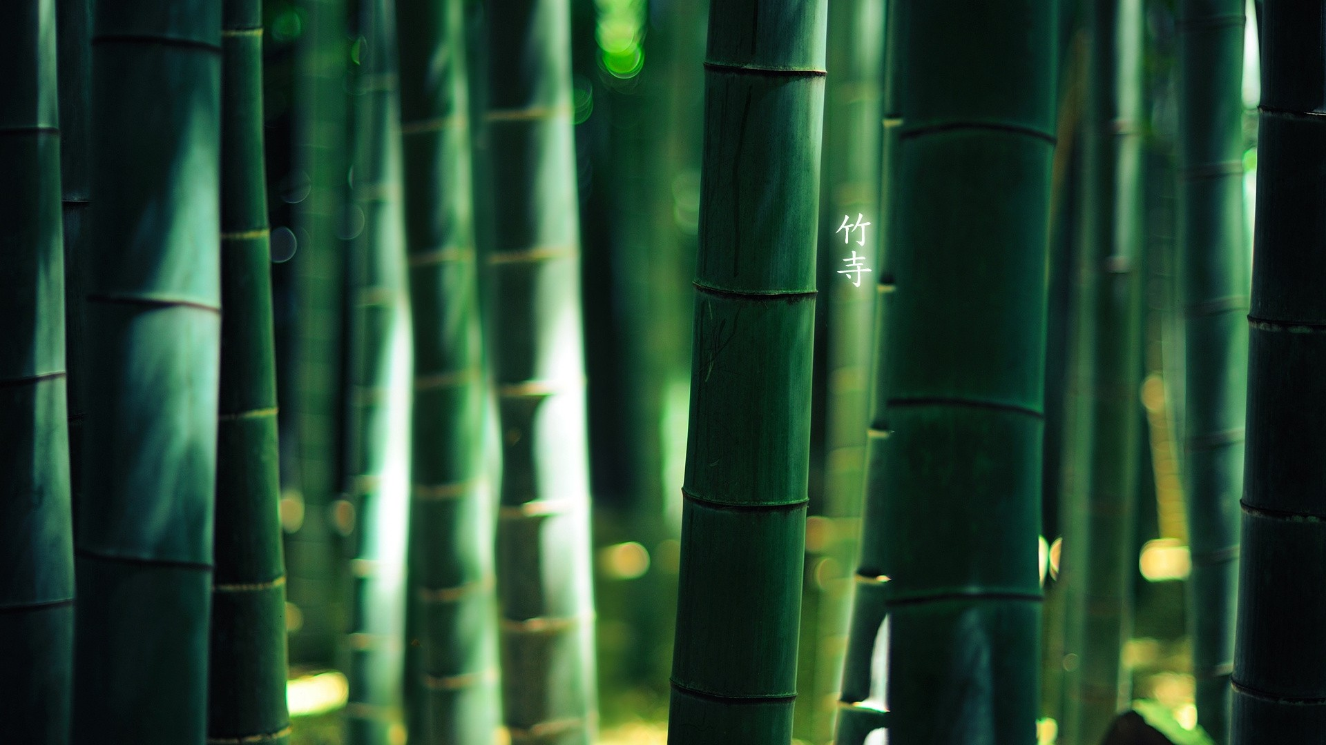Bamboo PC Wallpaper