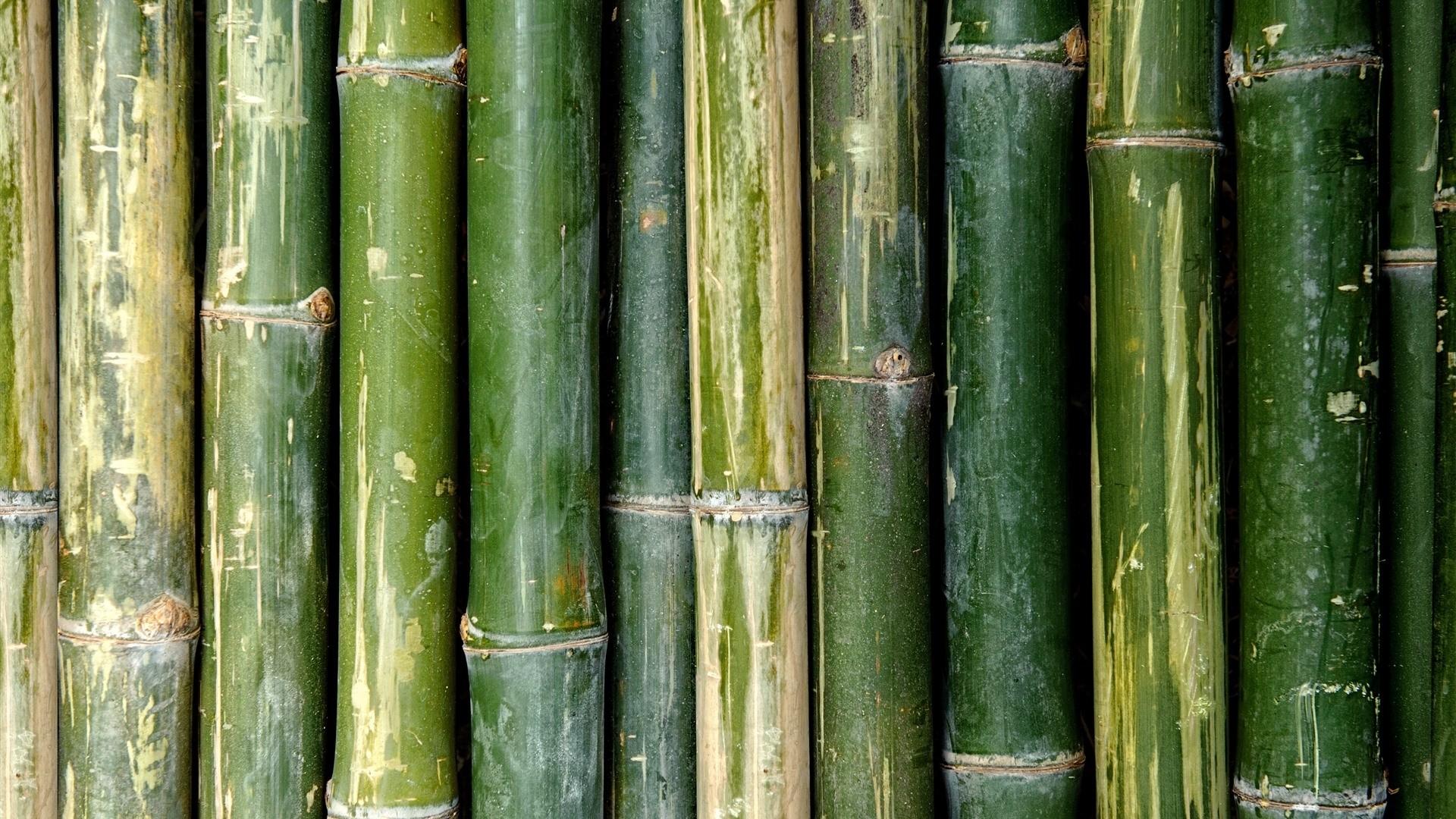 Bamboo Free Wallpaper