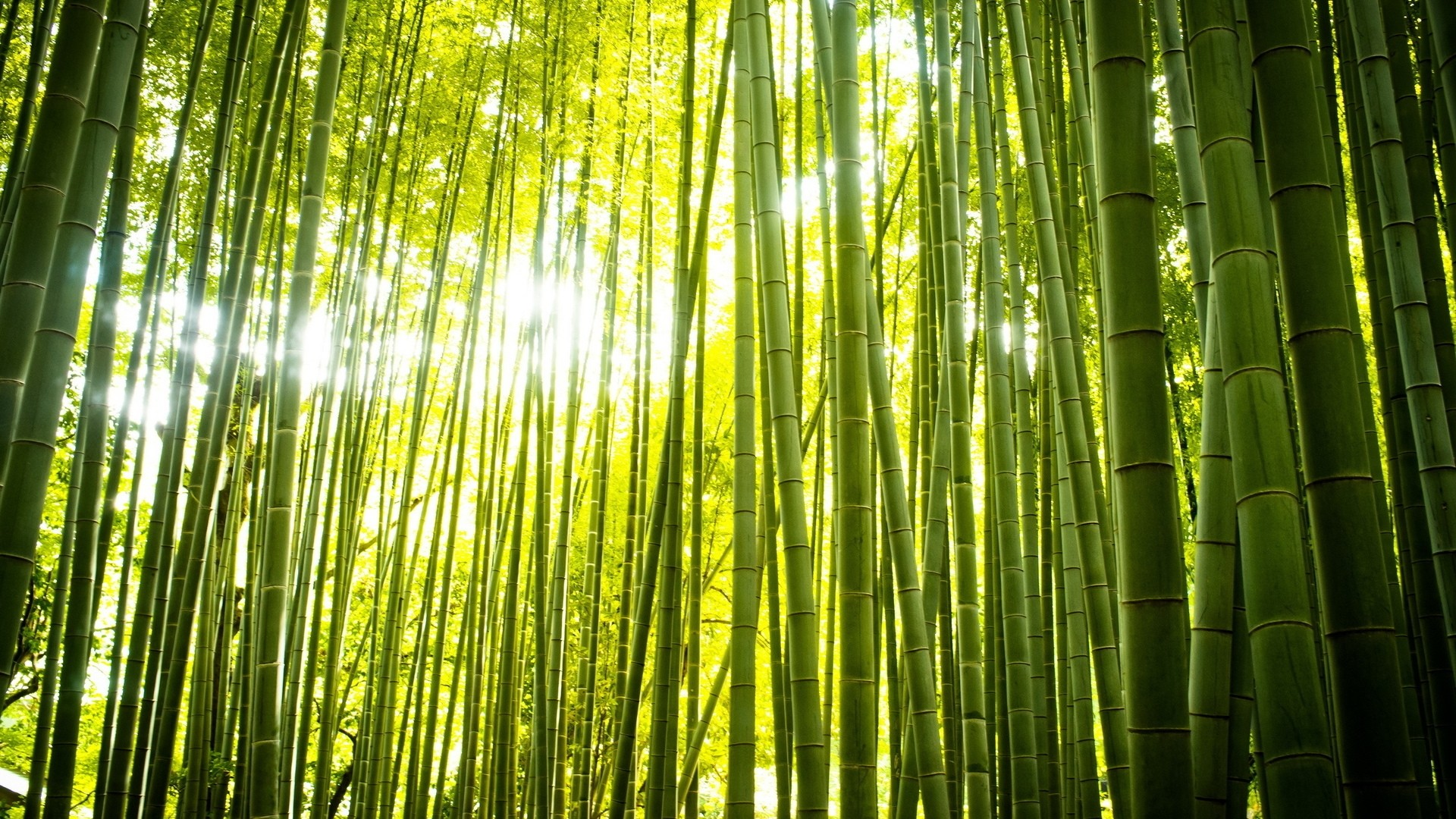 Bamboo Wallpaper for pc