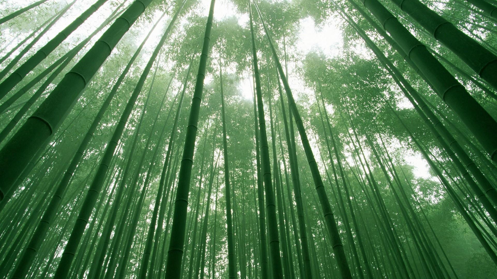 Bamboo HD Wallpaper