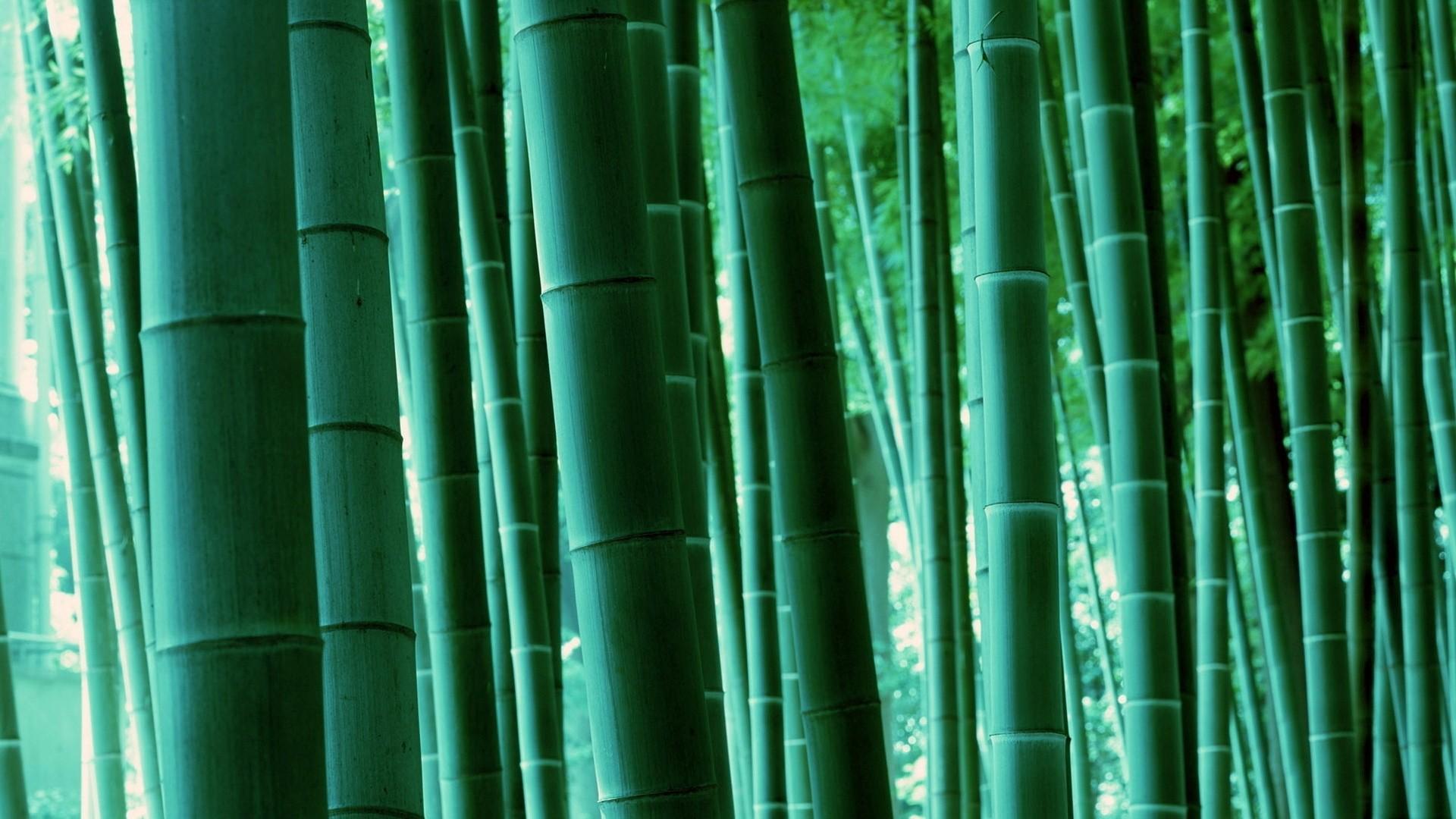 Bamboo a wallpaper