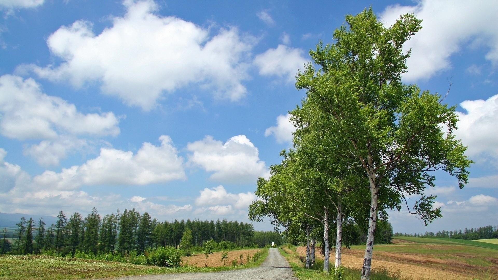Birch Tree HD Download