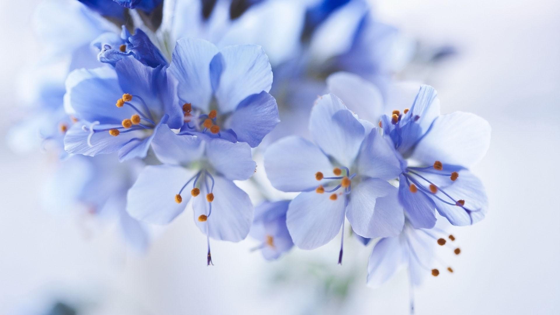 Blue Flower PC Wallpaper