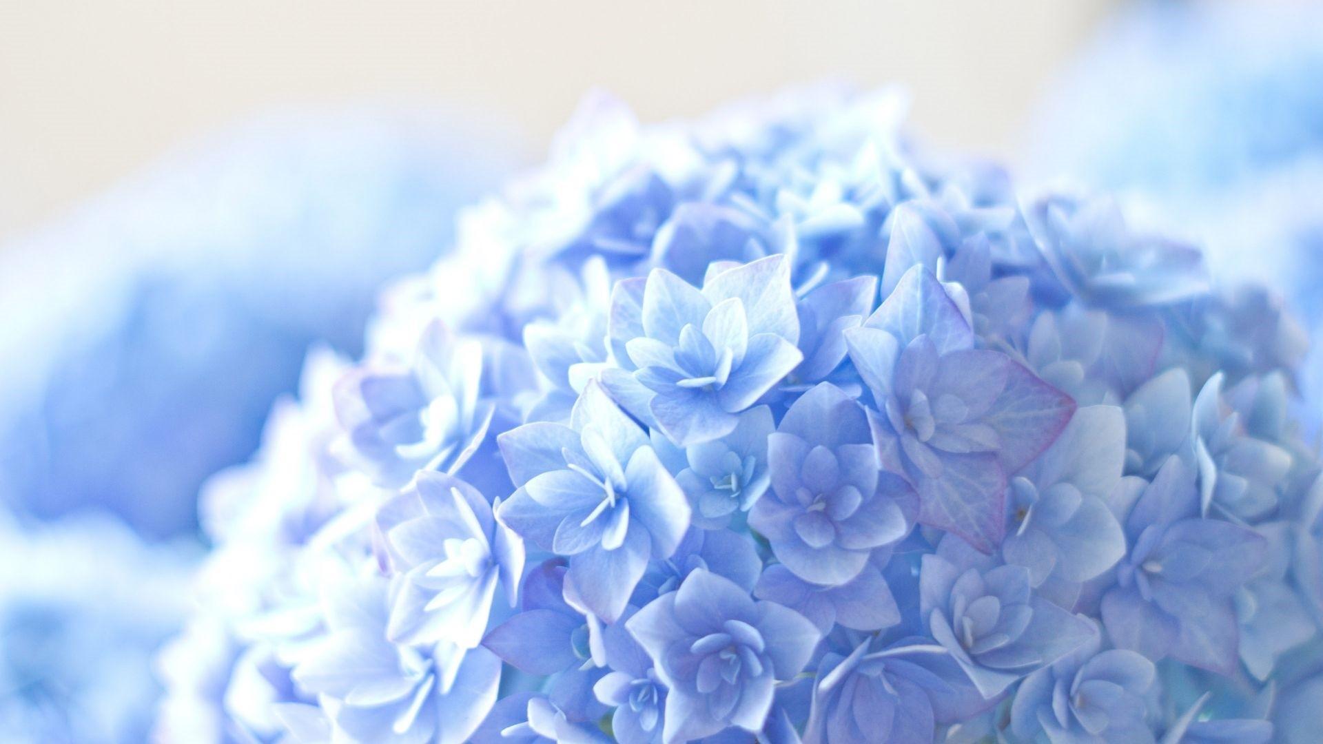 Blue Flower Desktop wallpaper