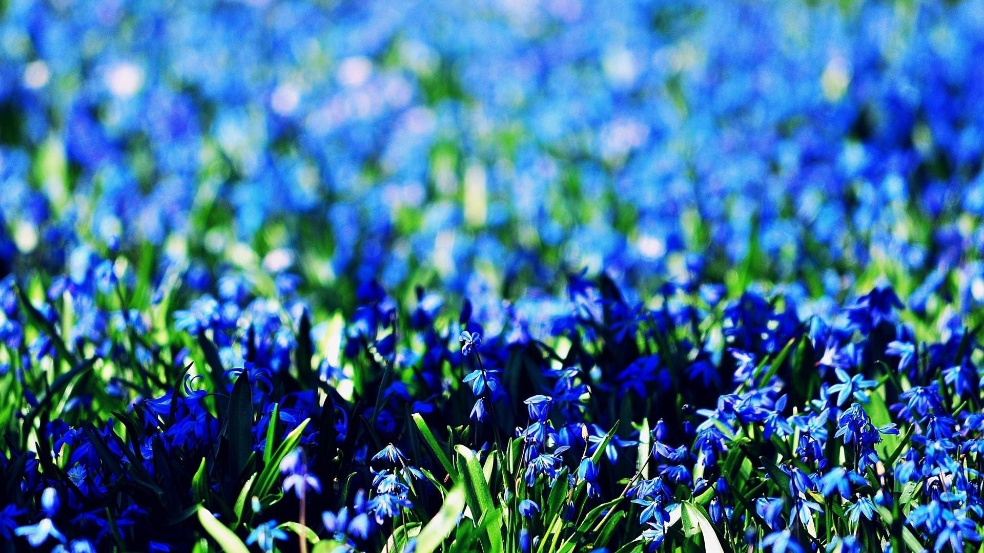 Blue Flower Wallpaper theme