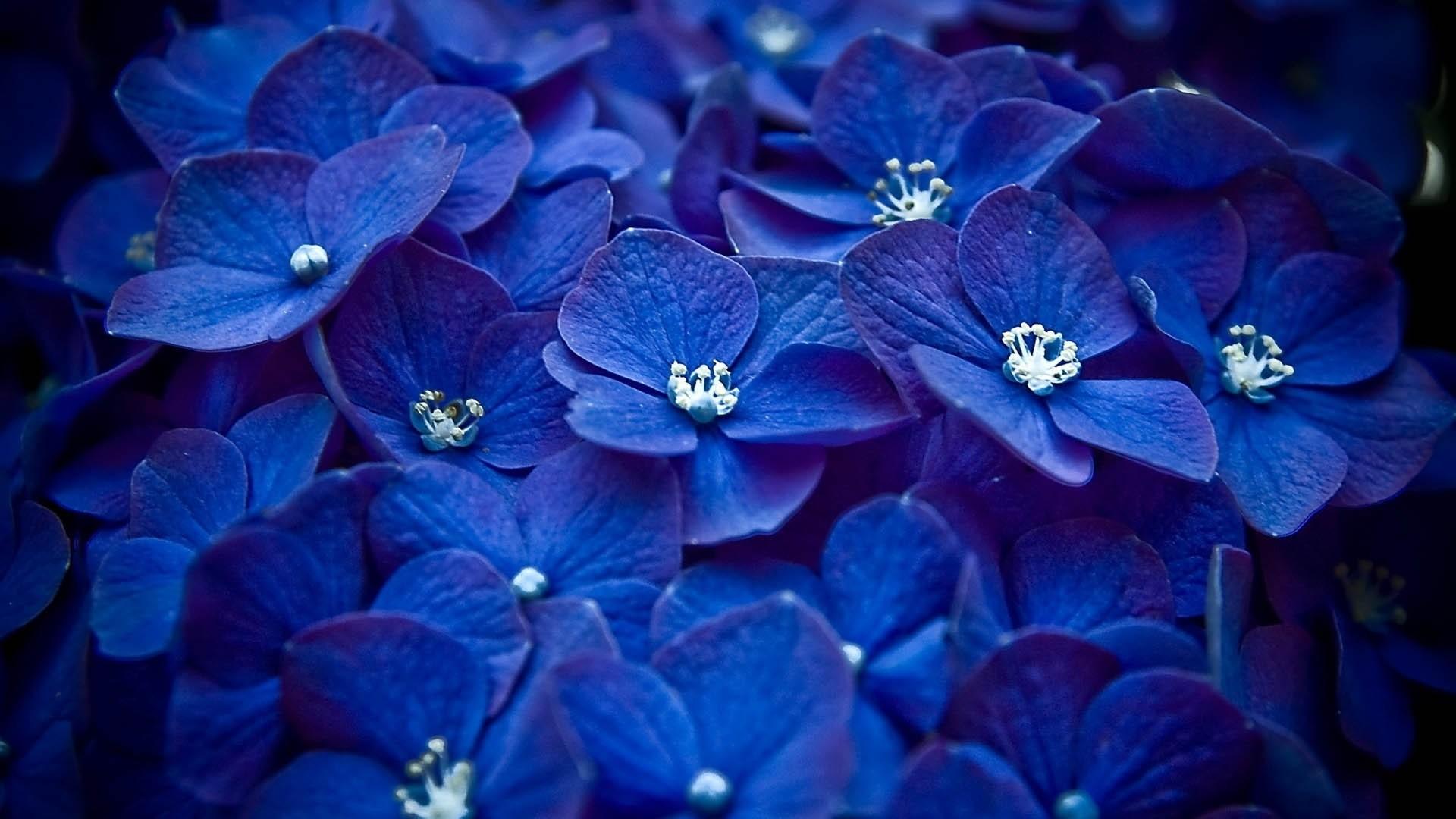 Blue Flower Download Wallpaper