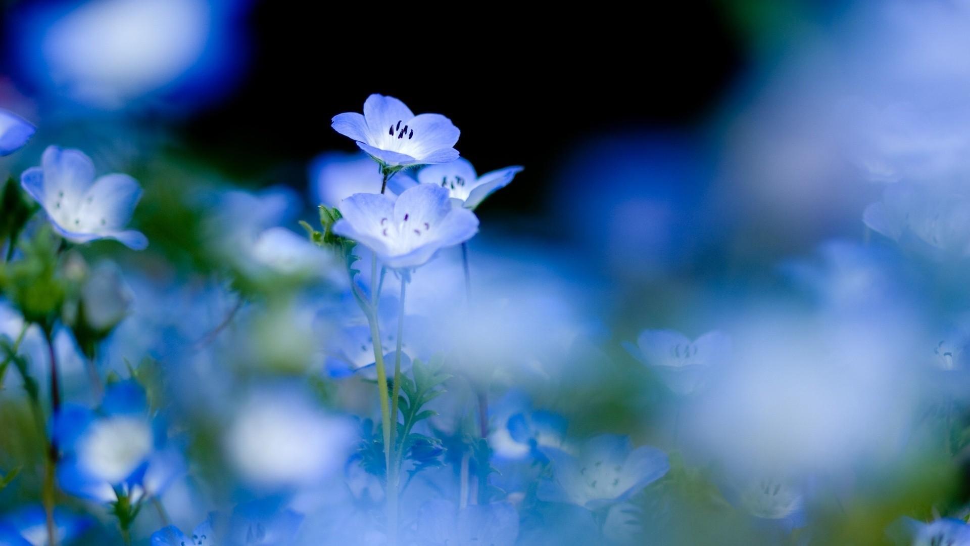 Blue Flower Wallpaper image hd