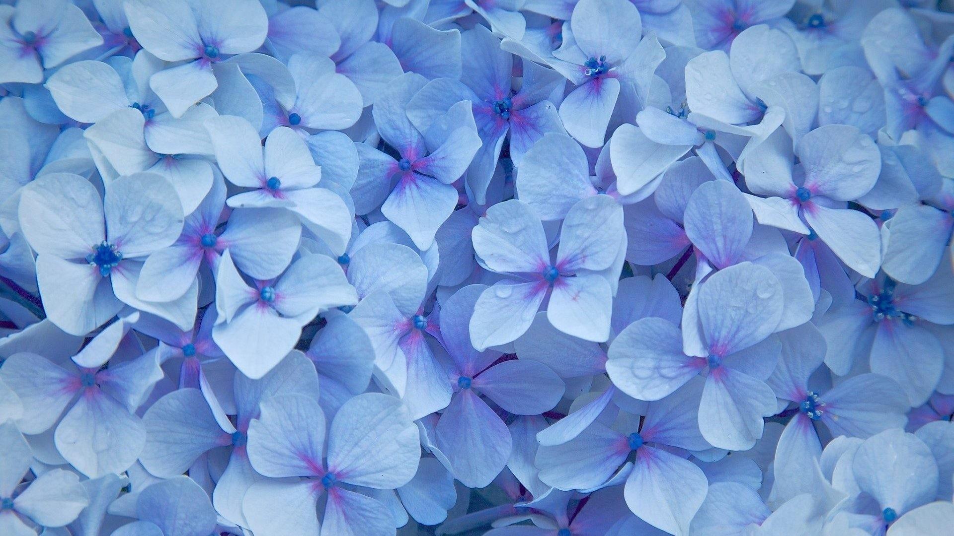 Blue Flower Wallpaper for pc