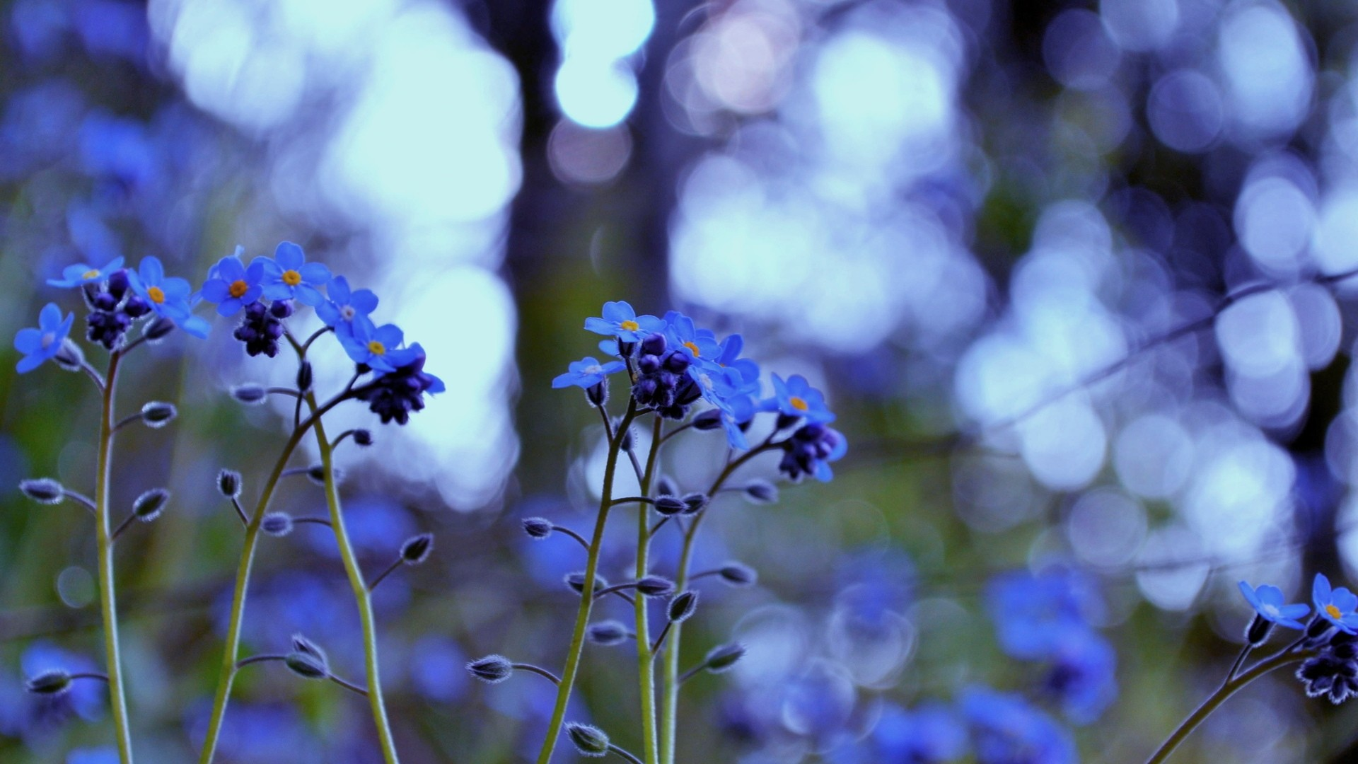 Blue Flower Wallpaper and Background