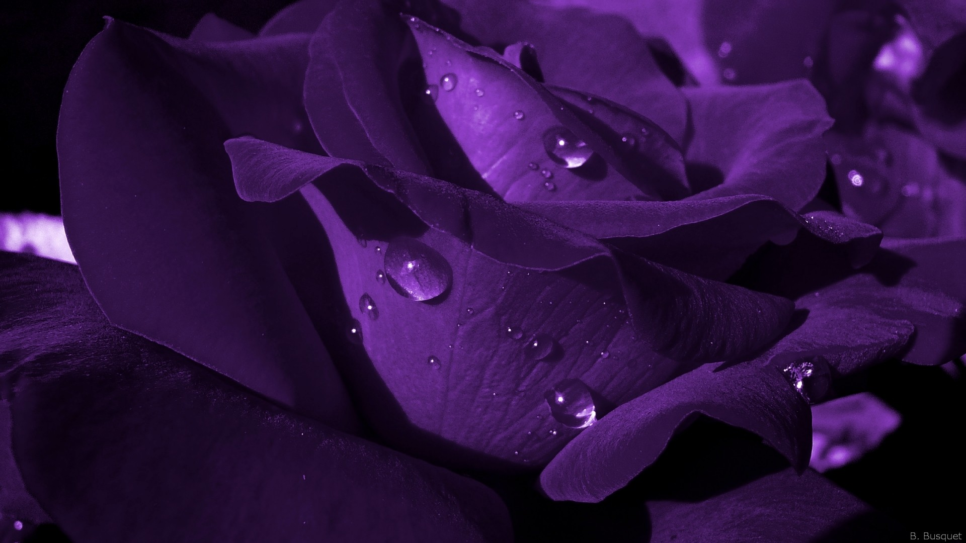 Purple Flower PC Wallpaper HD
