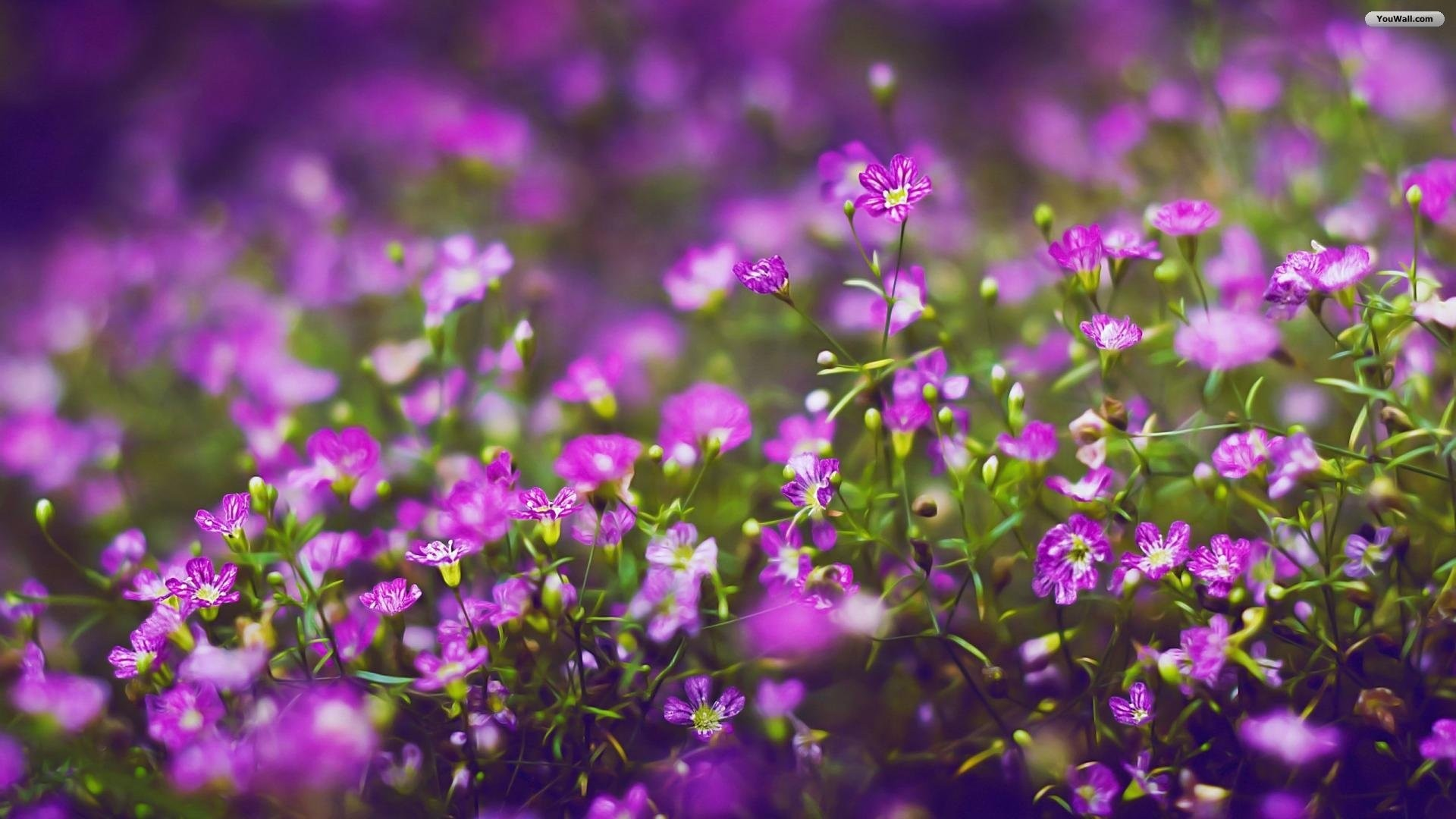 Purple Flower PC Wallpaper