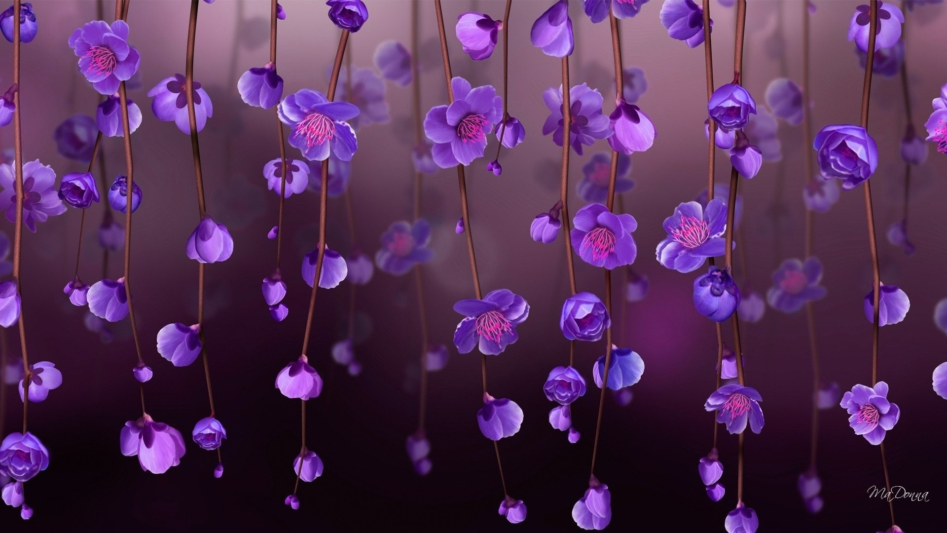 Purple Flower Picture