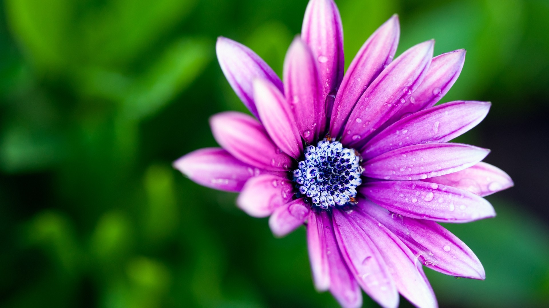 Purple Flower Download Wallpaper