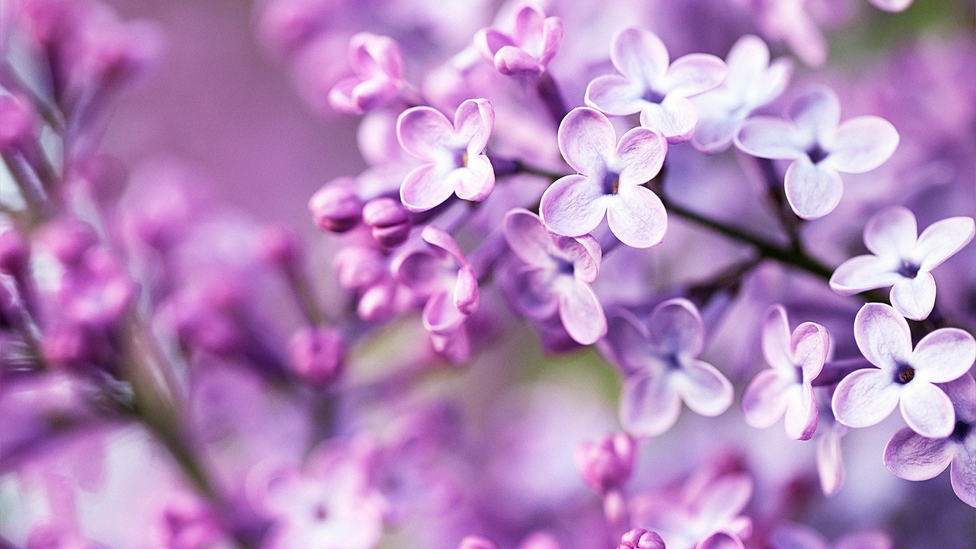 Purple Flower Free Wallpaper