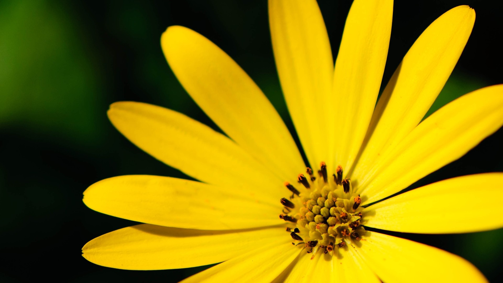 Yellow Flower Desktop wallpaper
