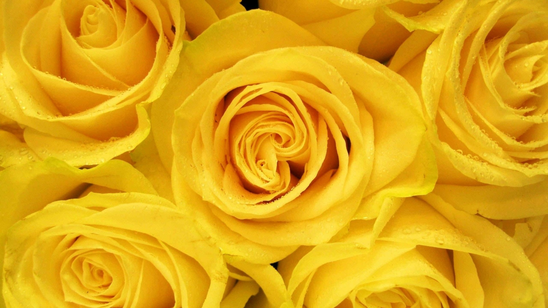 Yellow Flower PC Wallpaper
