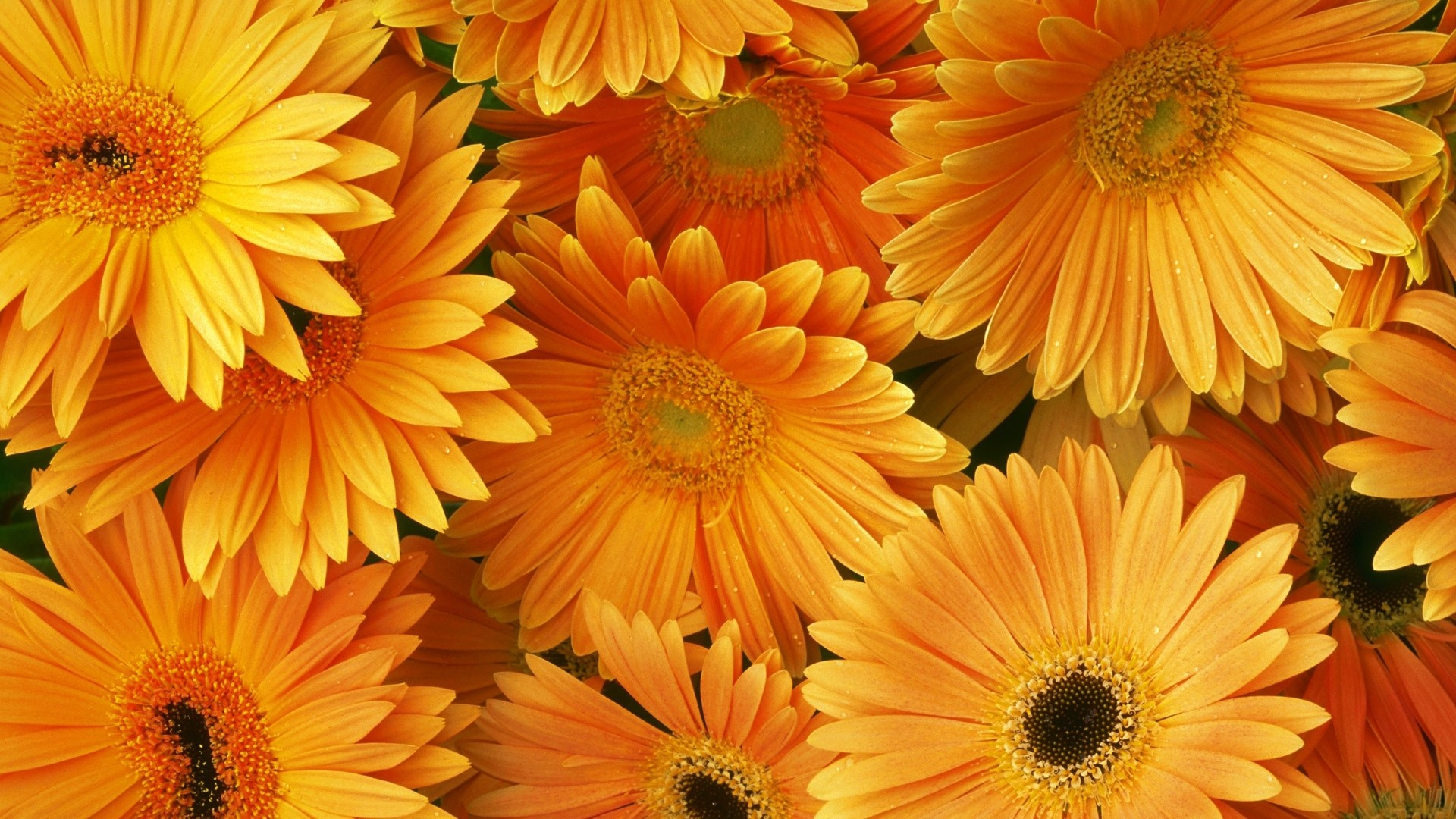 Yellow Flower PC Wallpaper HD