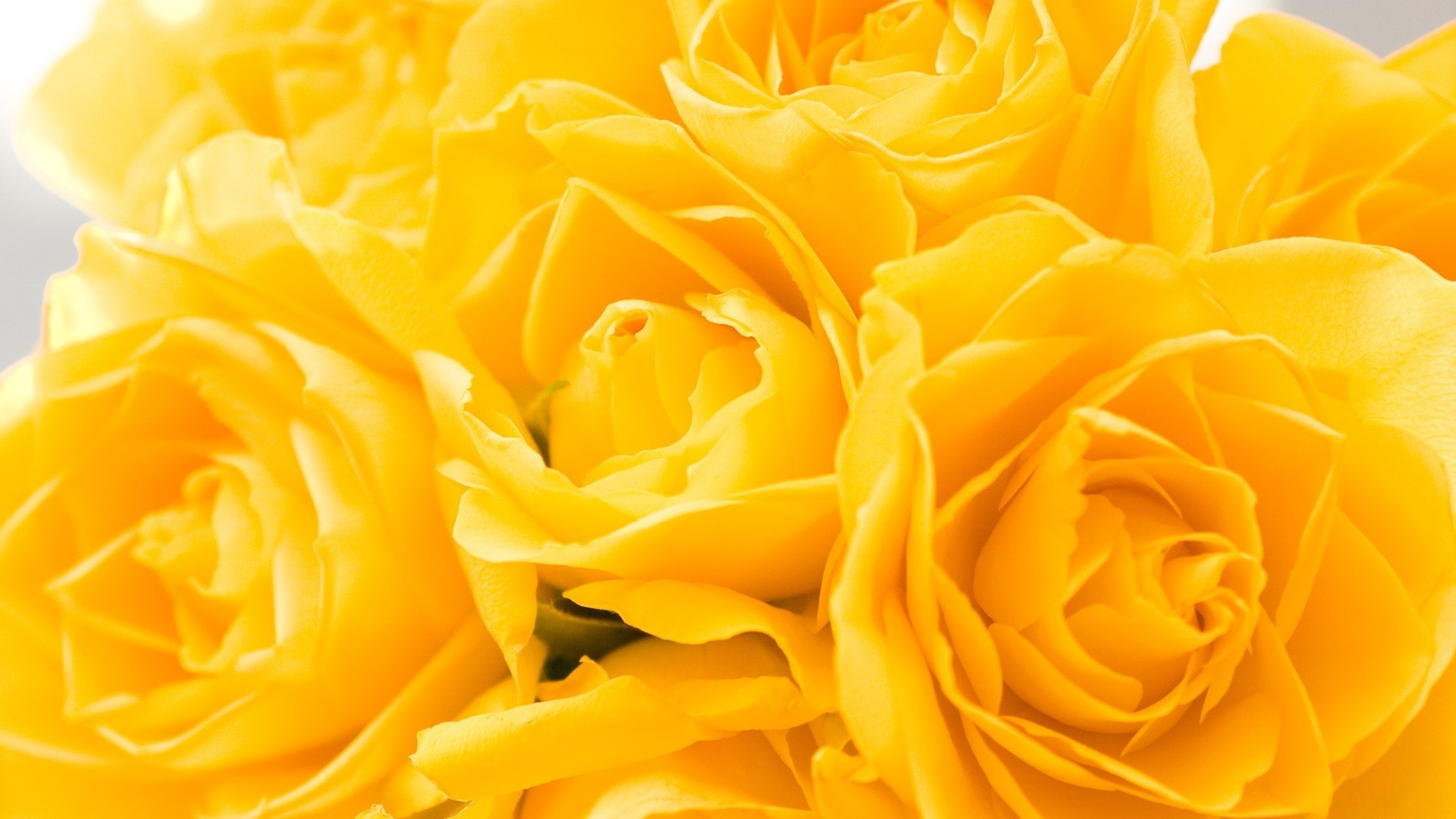 Yellow Flower Background Wallpaper