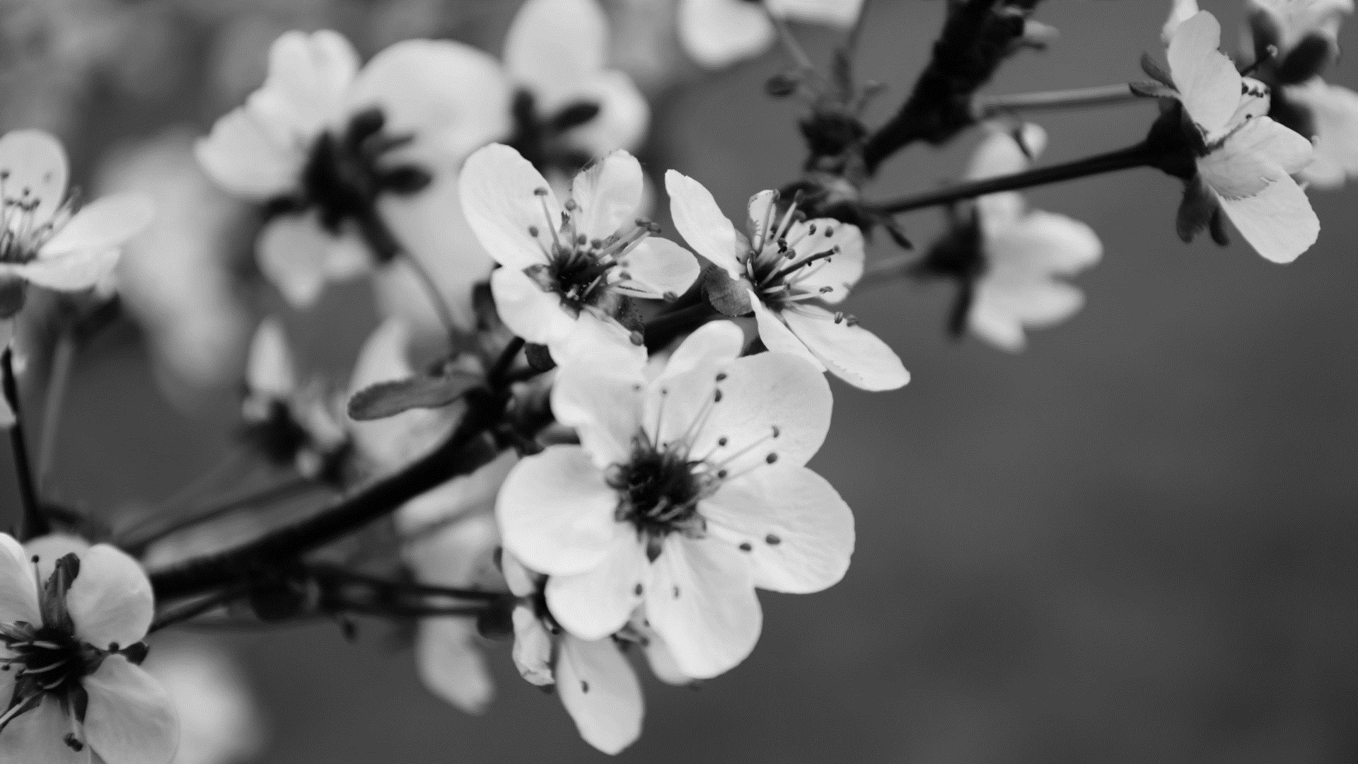 Black And White Floral Full HD Wallpaper