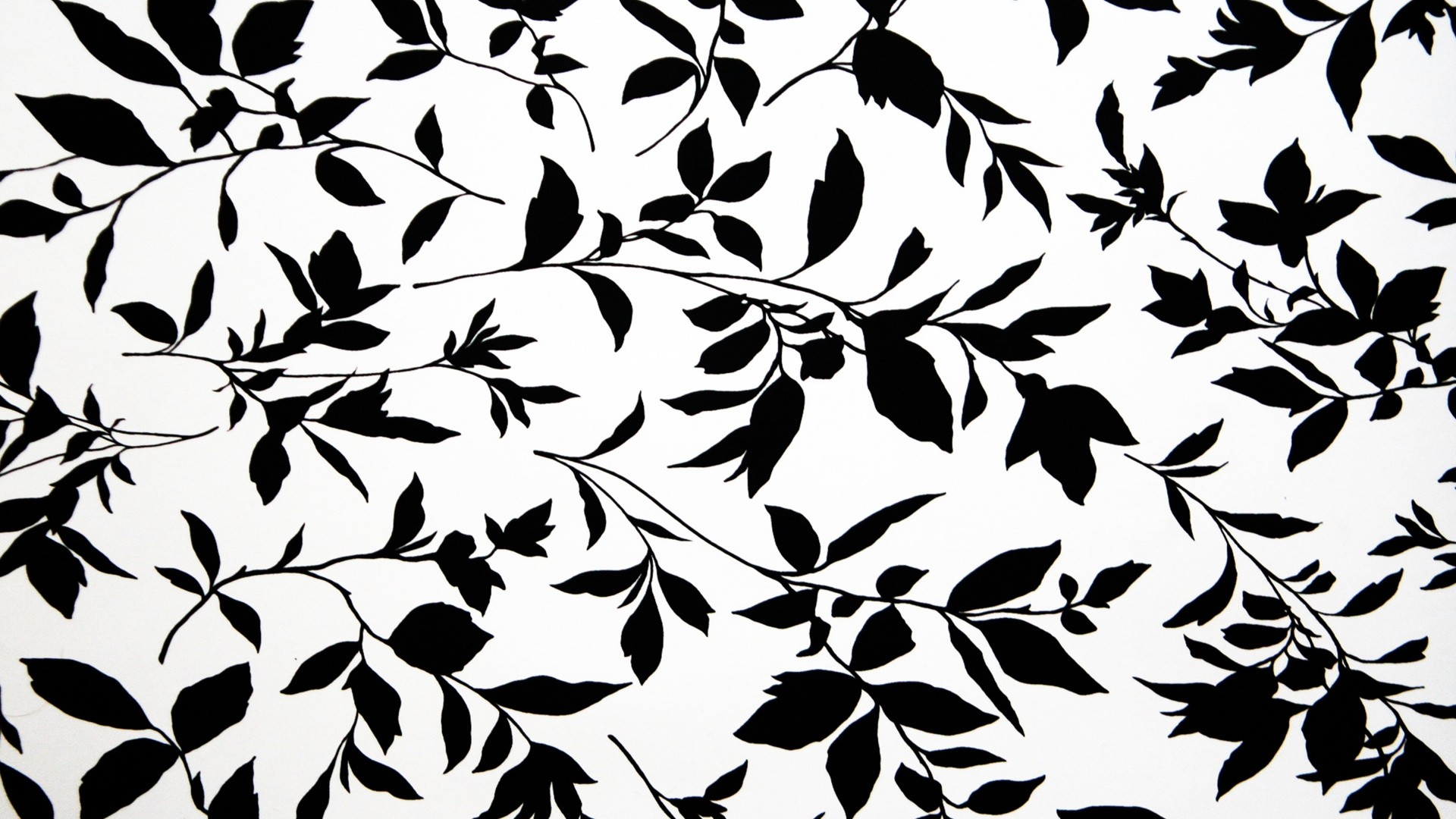 Black And White Floral Picture