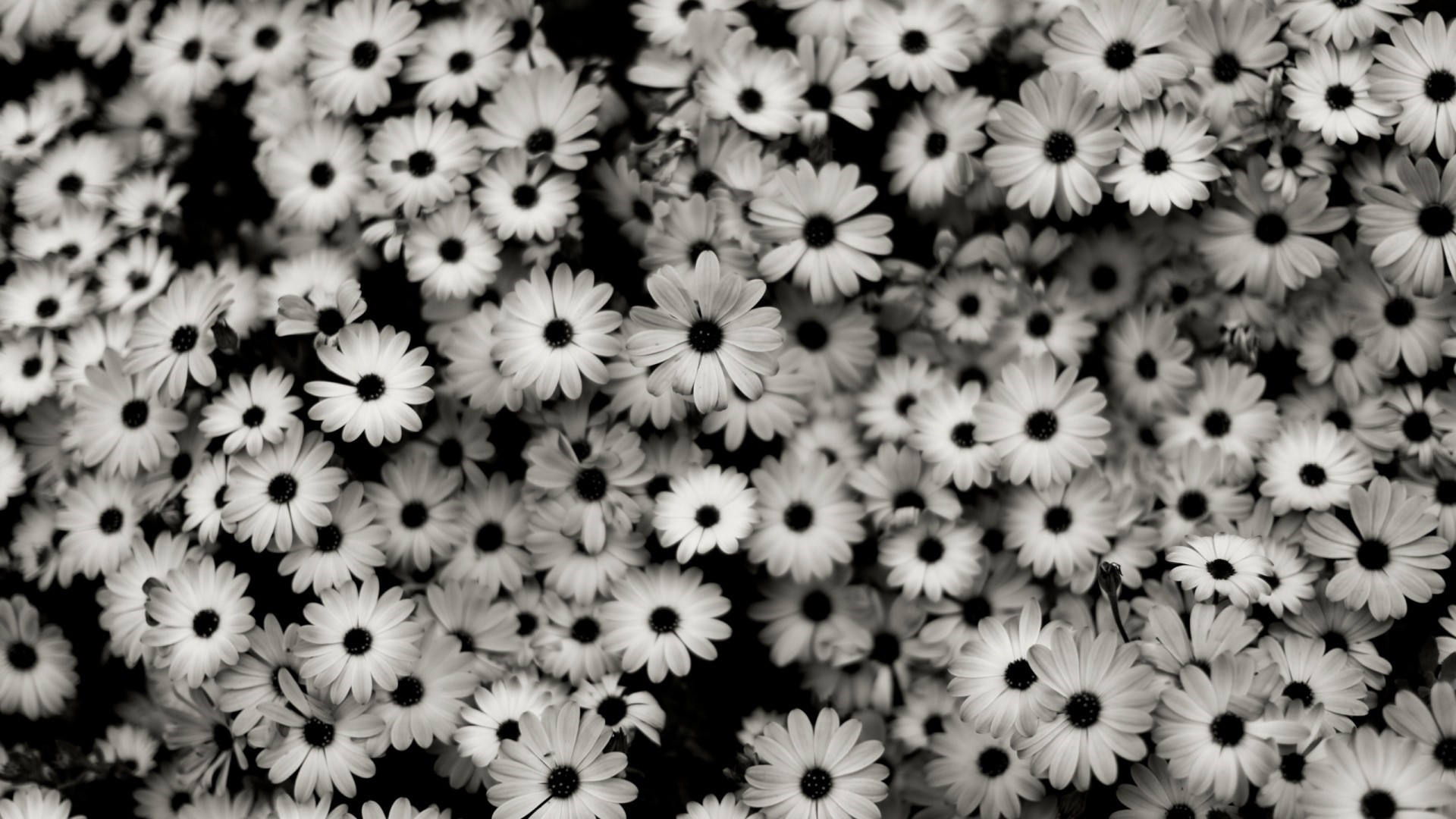 Black And White Floral Wallpaper theme