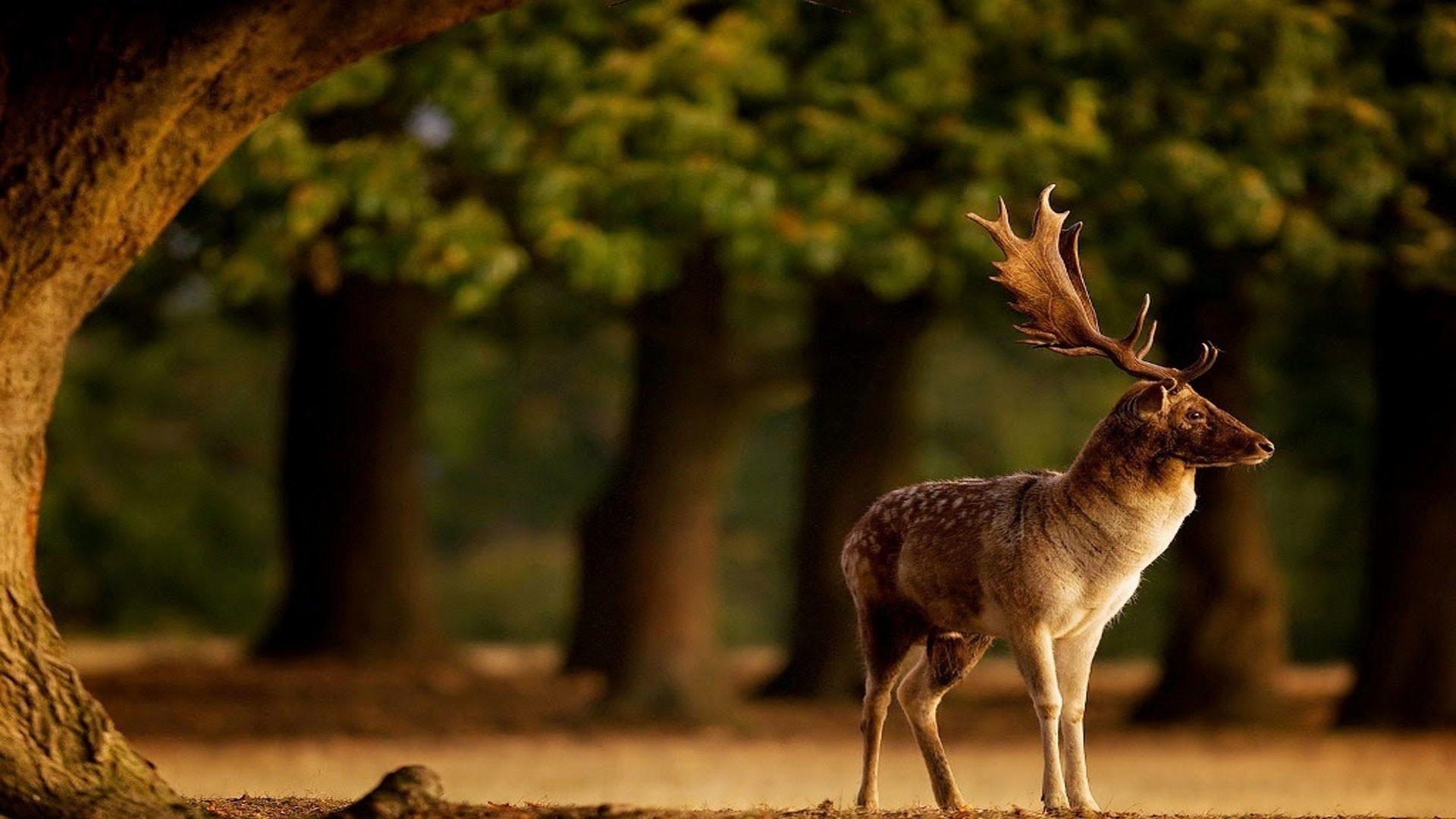 National Geographic Wallpapers 24 Images Animals Category