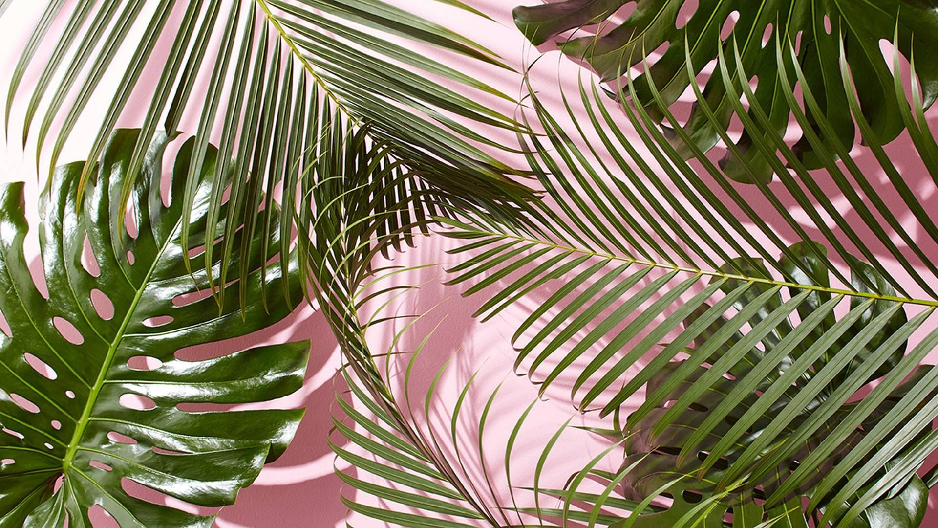Tropical Leaf Desktop Wallpaper