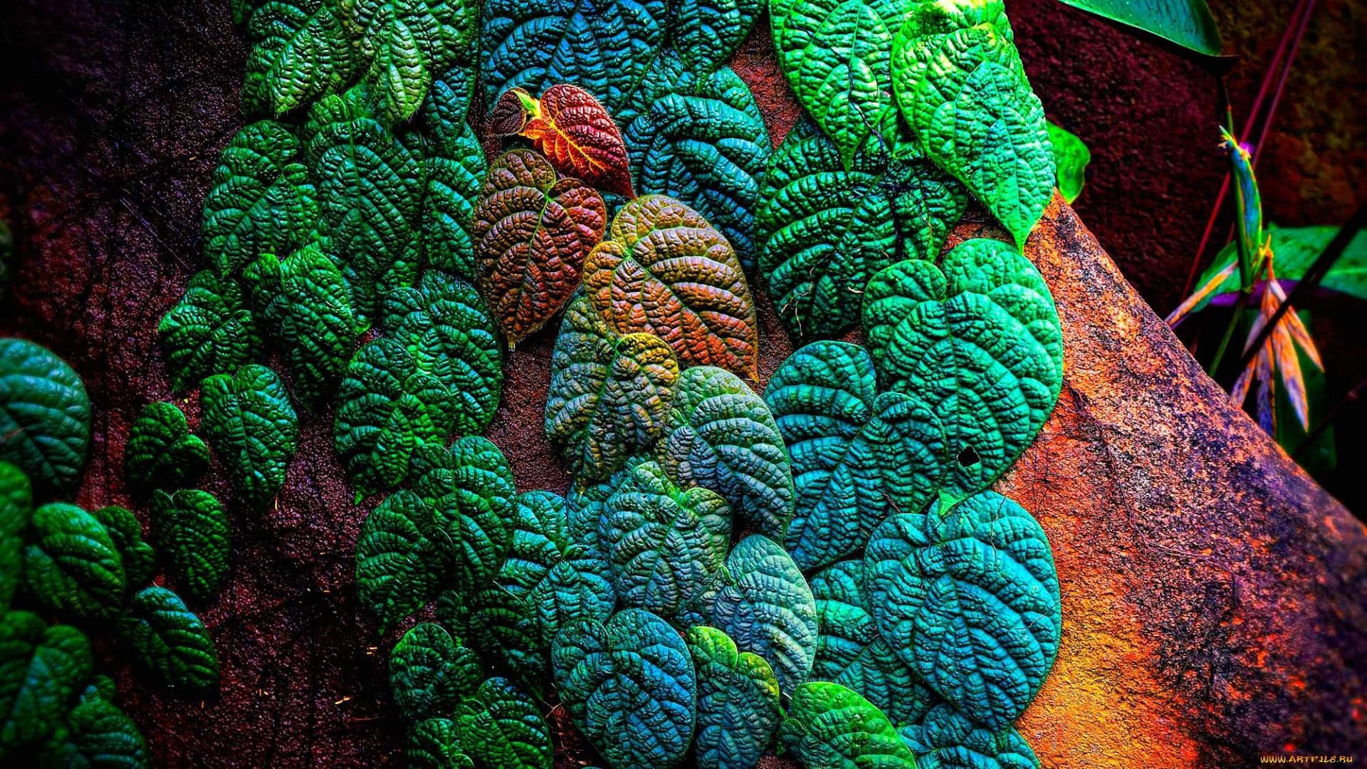 Tropical Leaf Wallpaper image hd