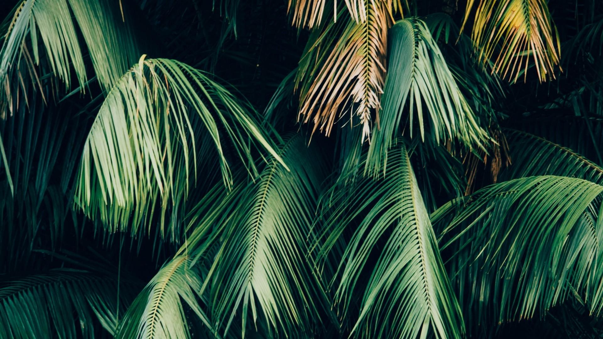 Tropical Leaf computer wallpaper